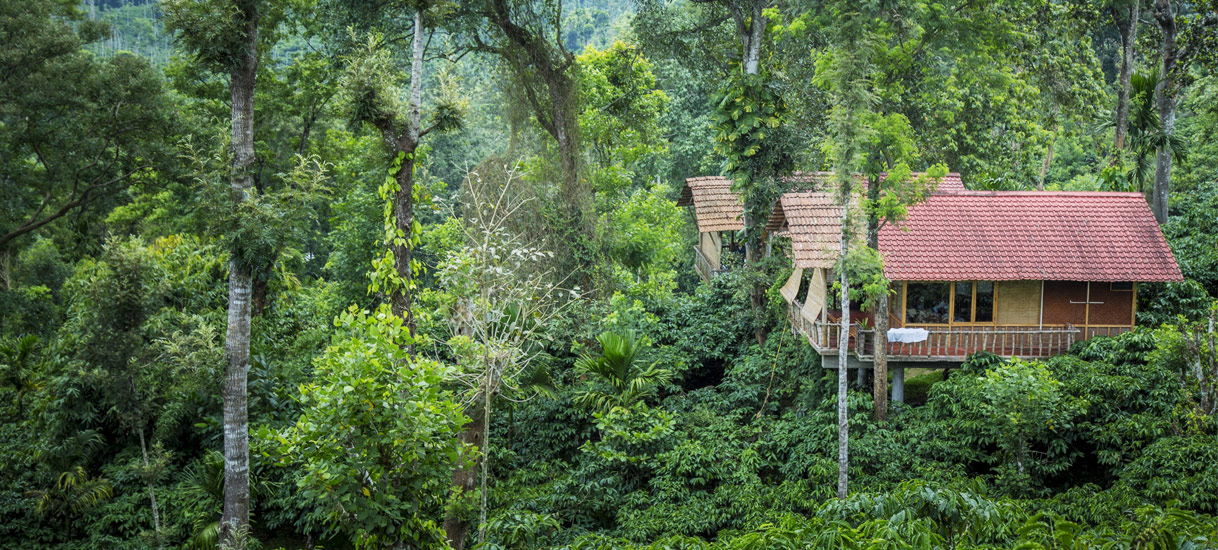 Tree house at Coffee County Resorts Wayanad